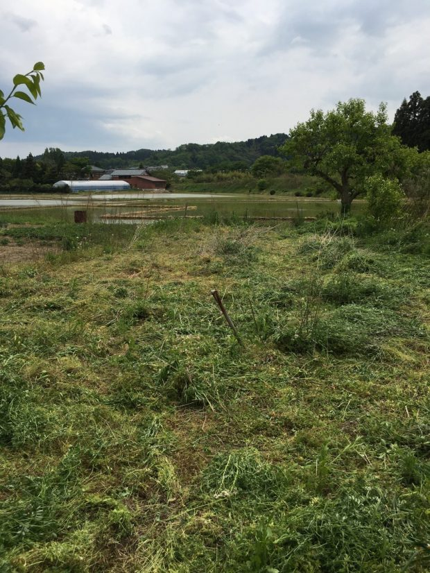 【新潟市秋葉区】60坪ほどの草刈りのご依頼 お客様の声