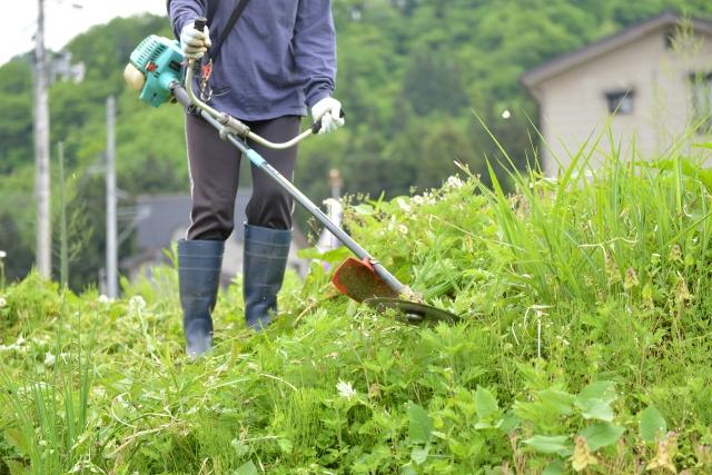 佐渡市で草刈りに最適な年3回の時期~楽に草刈りを終えるコツまで徹底解説